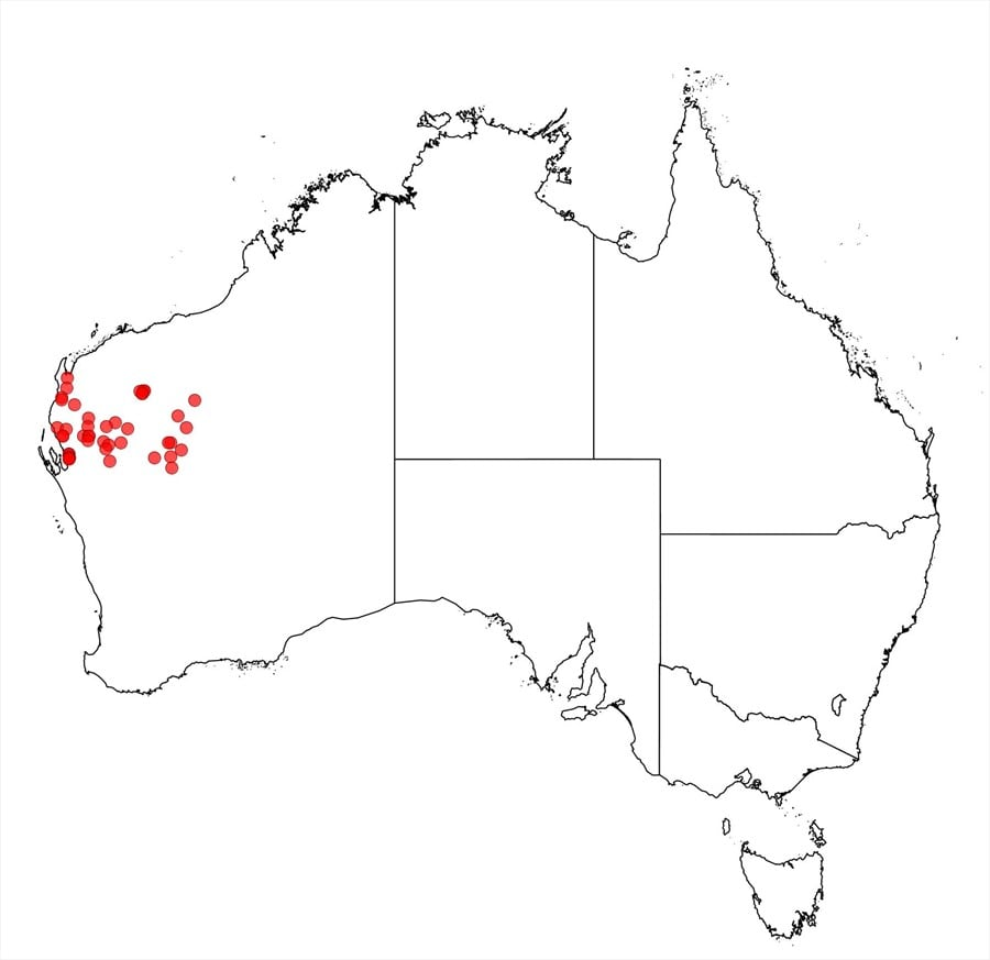 Factsheet Acacia Cuspidifolia