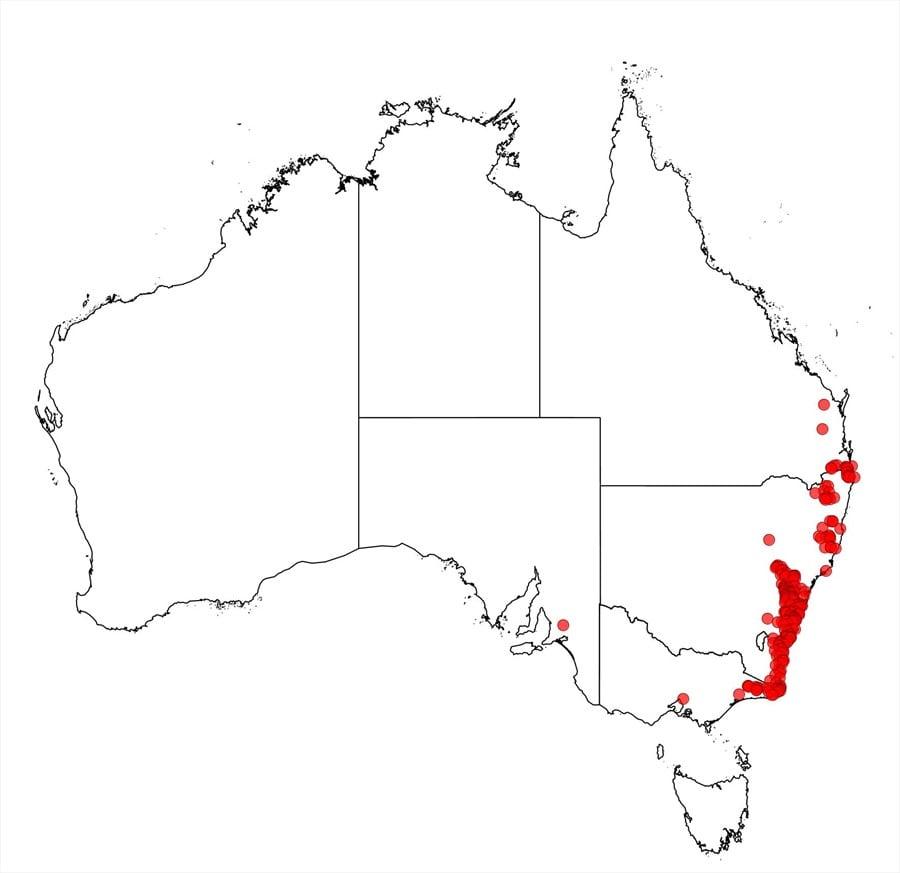 Factsheet Acacia Obtusifolia
