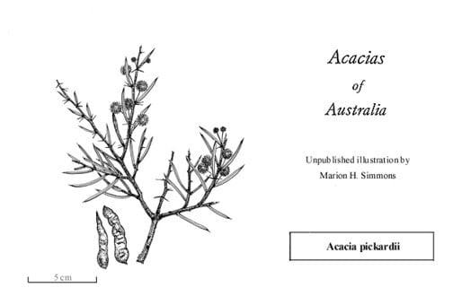 Factsheet Acacia Pickardii